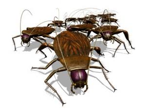 Kakerlaken - erste Anzeichen