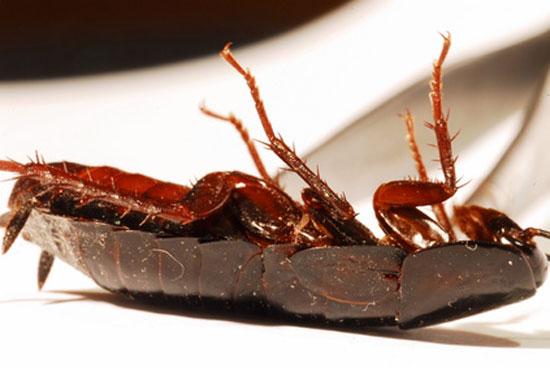 Verhalten bei Kakerlaken Befall
